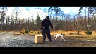 How to train a DOG PIT BULL DOG TRAINING How to train a PIT BULL DOG How to train a puppy - How to train a DOG - PIT BULL DOG TRAINING - How to train a PIT BULL DOG - How to train a puppy