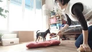Dog training for Delta Society - Dog training for Delta Society