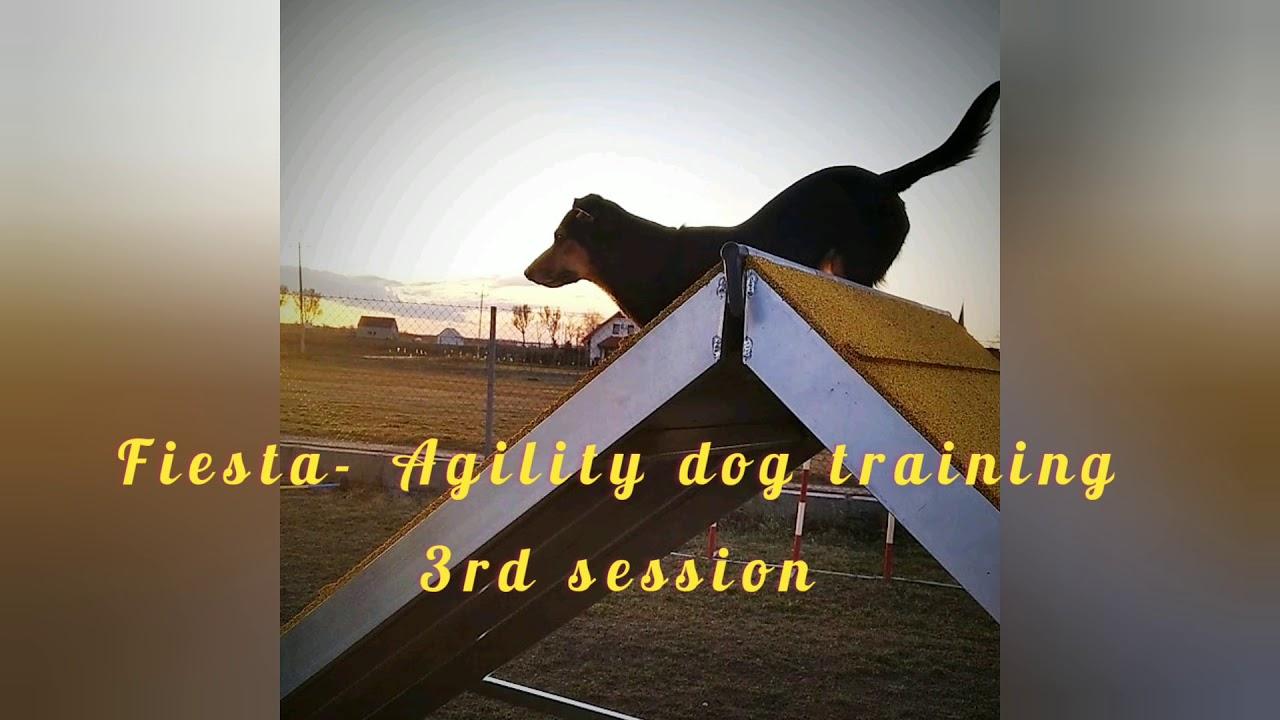 Fiesta Agility dog training 3rd session - Fiesta - Agility dog training, 3rd session