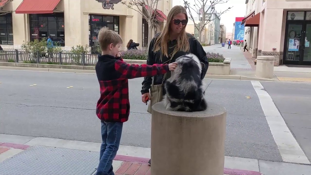 Impressive Australian Shepherd Georgie Dog Training in Monterey CA - Impressive Australian Shepherd | Georgie | Dog Training in Monterey, CA