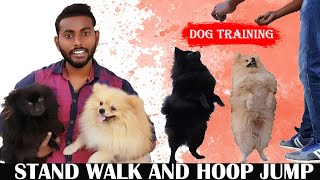 Dog Training Tips and Tricks Video That You Will Love To Watch Cute Pomeranian Day 1 in Hindi - Dog Training Tips and Tricks Video That You Will Love To Watch | Cute Pomeranian Day 1 in Hindi