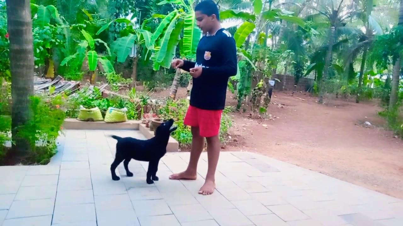 Puppy dog training - Puppy dog training
