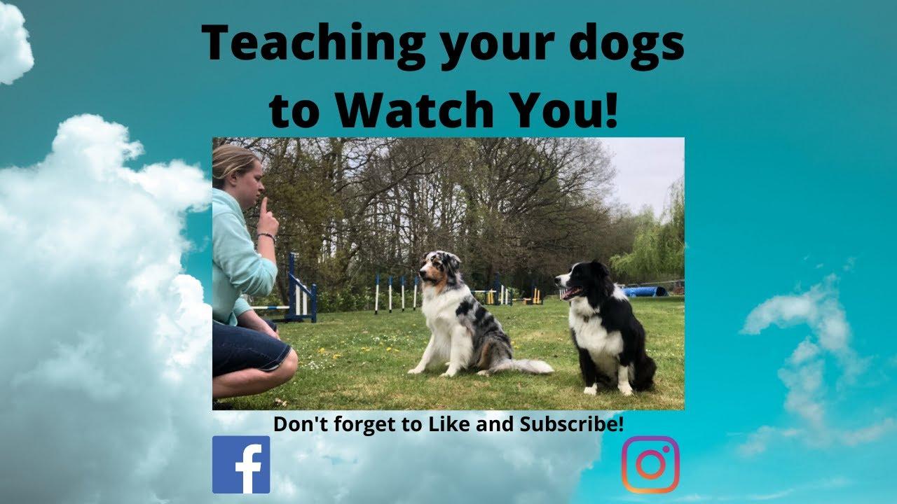 Watch Me Dog Training - Watch Me Dog Training!
