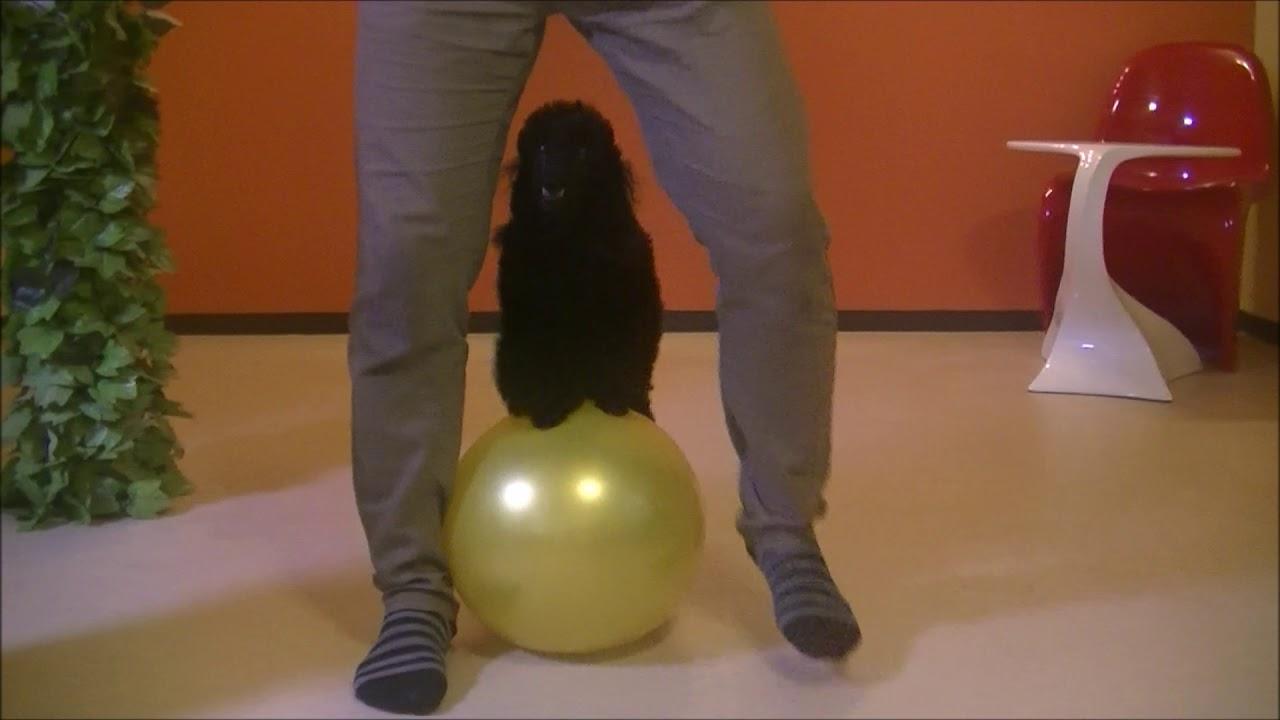 Dog Training Movie777 - 犬の訓練動画です♪Dog Training Movie777♪