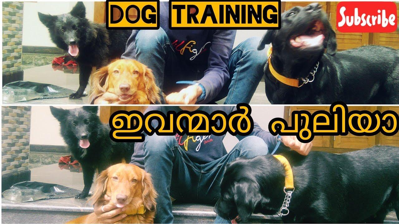 Dog training section training part 1 - ഇവന്മാർ പുലിയാ | #Dog training section | #training part 1