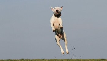 how to get the most out of your dog while training - Canine Training Can Be Easy With These Tips