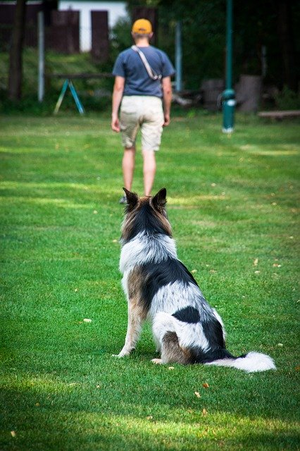 make your dog obey you with some simple tips 1 - Make Your Dog Obey You With Some Simple Tips