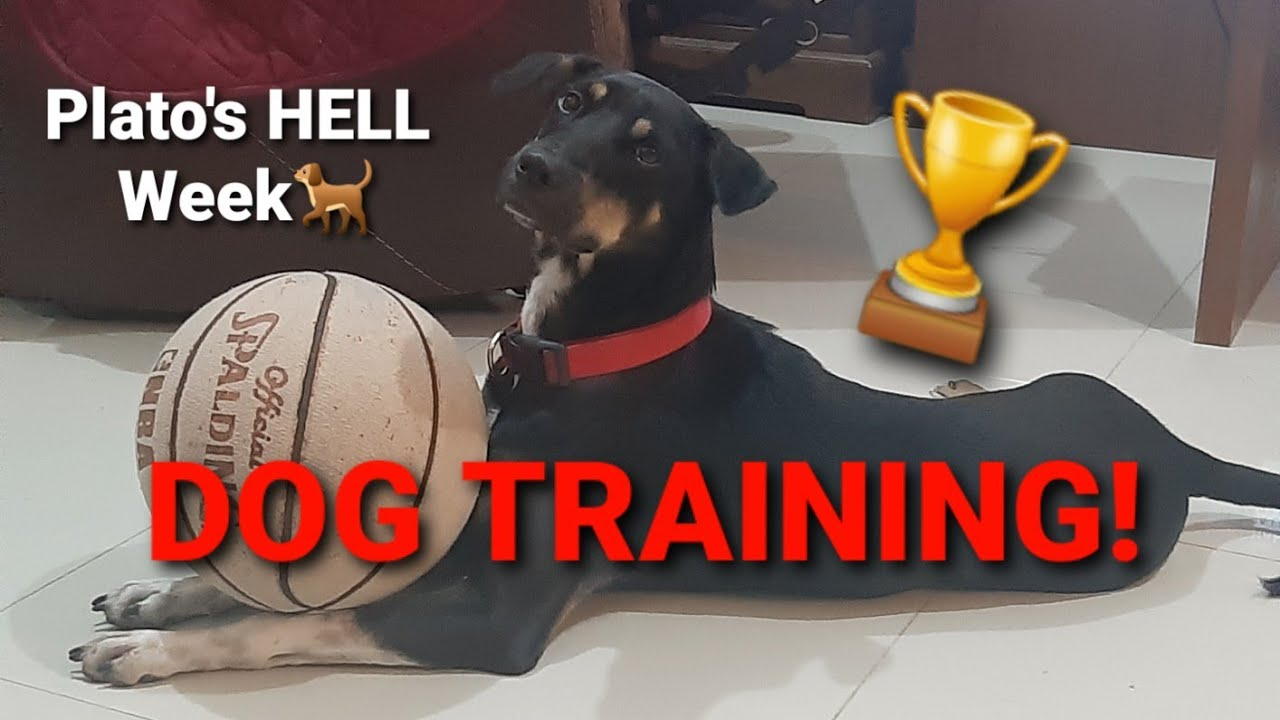 DOG TRAINING MASTER TRAINER Short Clip - DOG TRAINING / MASTER TRAINER  (Short Clip)