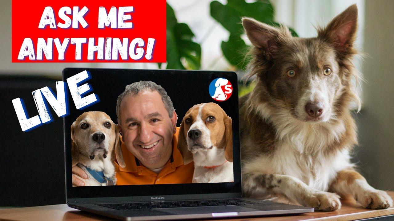 Saro Dog Training QA Session Ask Me Anything Aug. 282020 - Saro Dog Training Q&A Session - Ask Me Anything!   Aug. 28/2020