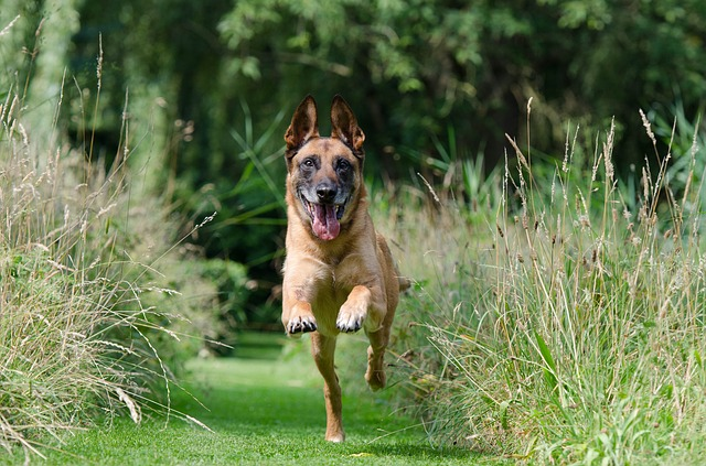 canine training tips to get the best results 2 - Canine Training Tips To Get The Best Results