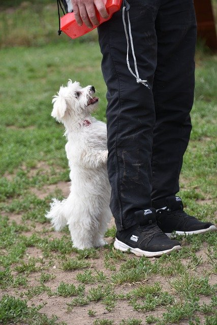 the best way to easily train your dog 1 - The Best Way To Easily Train Your Dog