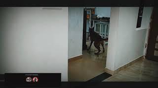 dog training and trainers training - dog training and trainers training