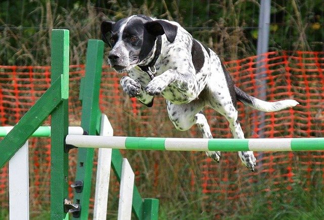 fast tips to get your dog on his best behavior - Fast Tips To Get Your Dog On His Best Behavior!