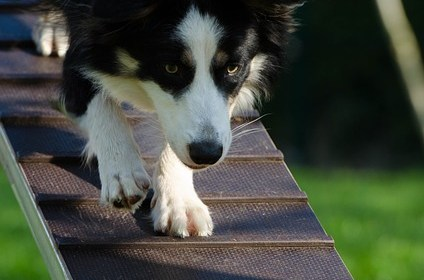 is dog training the right thing for you - Is Dog Training The Right Thing For You?