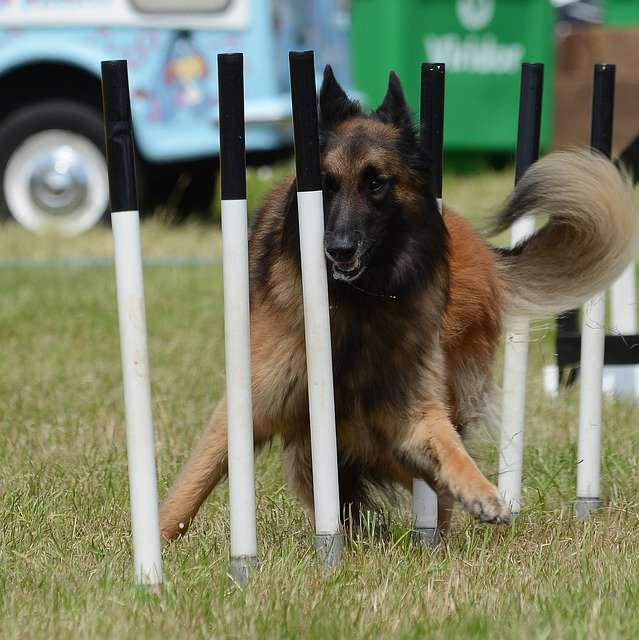 a solid training routine all dogs will benefit from 1 - A Solid Training Routine All Dogs Will Benefit From