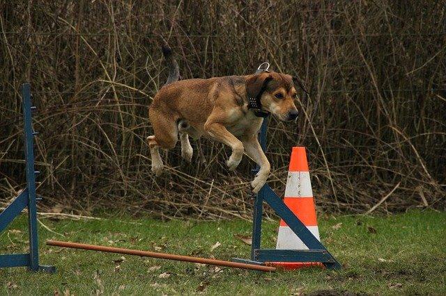 so many tricks to teach your dog - So Many Tricks To Teach Your Dog