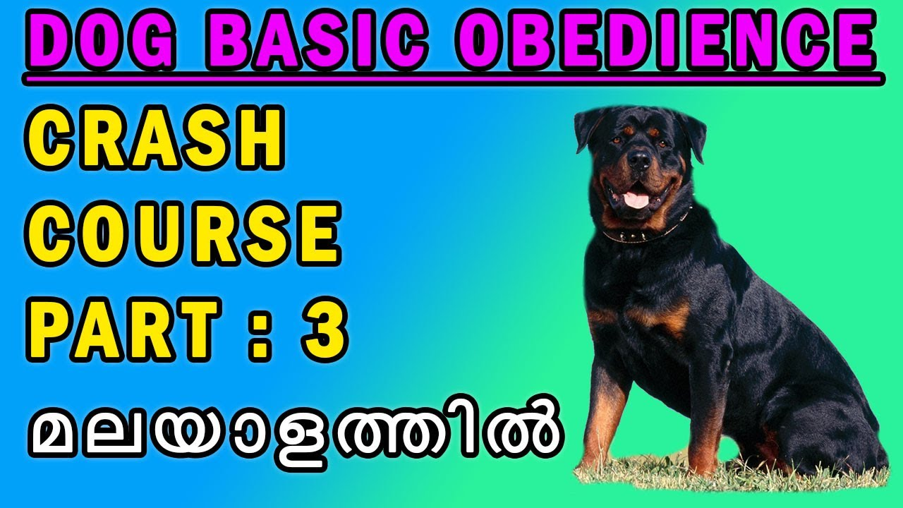 DOG BASIC OBEDIENCE COURSE PART 3 CRASH COURSE DOG TRAINING IN MALAYALAM  - DOG BASIC OBEDIENCE COURSE PART (3) - CRASH COURSE - DOG TRAINING IN MALAYALAM : നായ പരിശീലനം