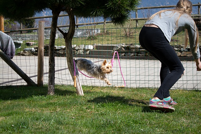 training your dog that will build a bond between you and your dog - Training Your Dog That Will Build A Bond Between You And Your Dog