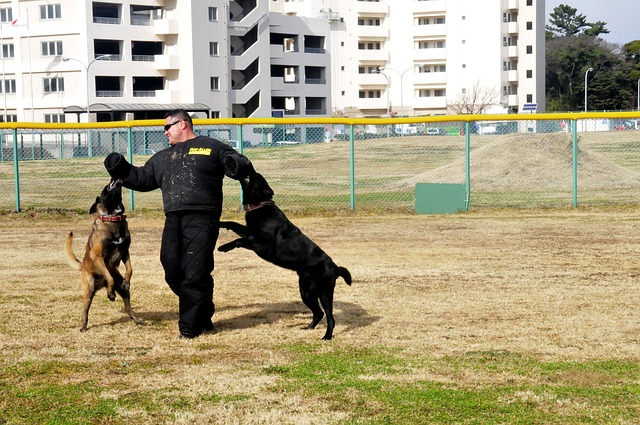 canine training doesnt have to be complicated try these simple ideas - Canine Training Doesn't Have To Be Complicated, Try These Simple Ideas!