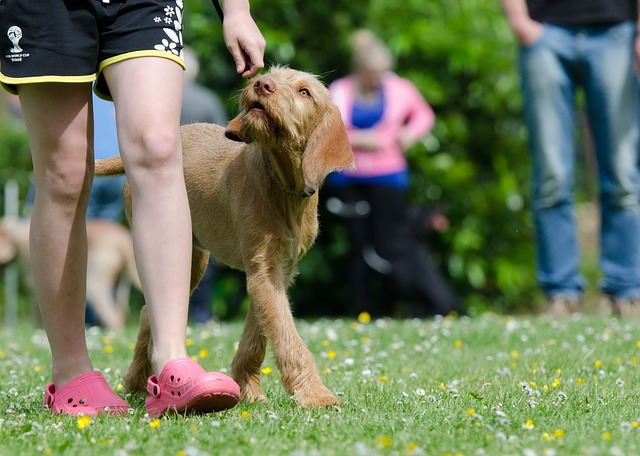 must have tips and tricks for effective dog training - Must Have Tips And Tricks For Effective Dog Training