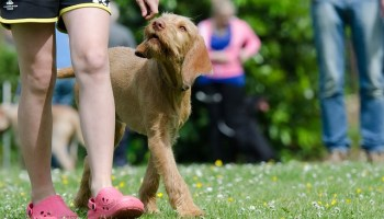 must have tips and tricks for effective dog training - Train Your Dog The Right Way.