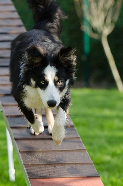 simple steps for successfully training your dog - Simple Steps For Successfully Training Your Dog