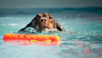 things you must know when it comes to training your dog - Simple Steps For Successfully Training Your Dog