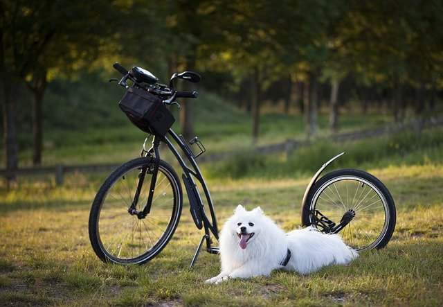 dog training tips to improve your poochs behavior 1 - Dog Training Tips To Improve Your Pooch's Behavior