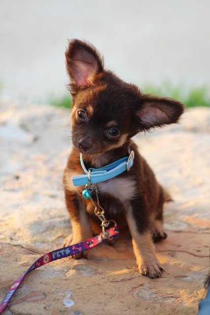 is your dog in need of training try these tips 1 - Is Your Dog In Need Of Training? Try These Tips!