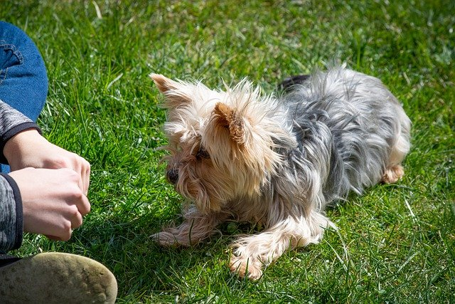 learn the best method of training your dog 1 - Learn The Best Method Of Training Your Dog