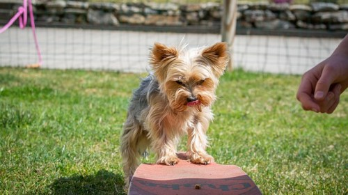 there is no need to stress when it comes to training your dog - There Is No Need To Stress When It Comes To Training Your Dog