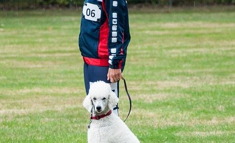 tips to train and bond with your dog - Tips To Train And Bond With Your Dog