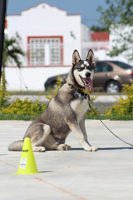 how to create a canine good citizen 1 - How To Create A Canine Good Citizen