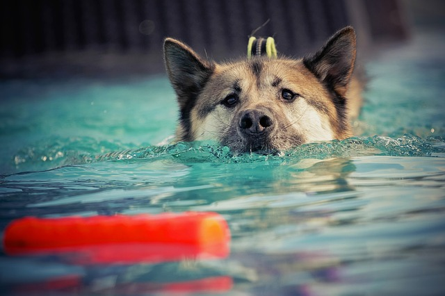tips and techniques for successful canine training 1 - Tips And Techniques For Successful Canine Training