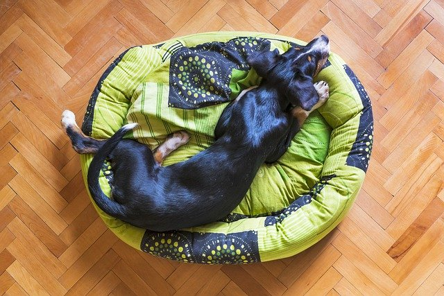 the right way to train your pup 1 - The Right Way To Train Your Pup