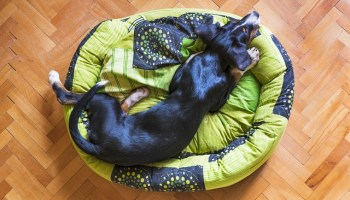 the right way to train your pup - How To Have An Obedient And Happy Dog