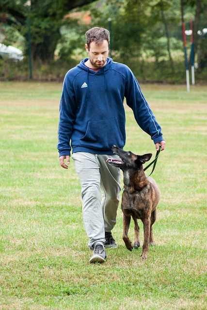canine training will bring you closer to your dog - Canine Training Will Bring You Closer To Your Dog