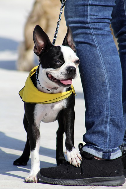 dog training is the best way to help your dog - Dog Training Is The Best Way To Help Your Dog