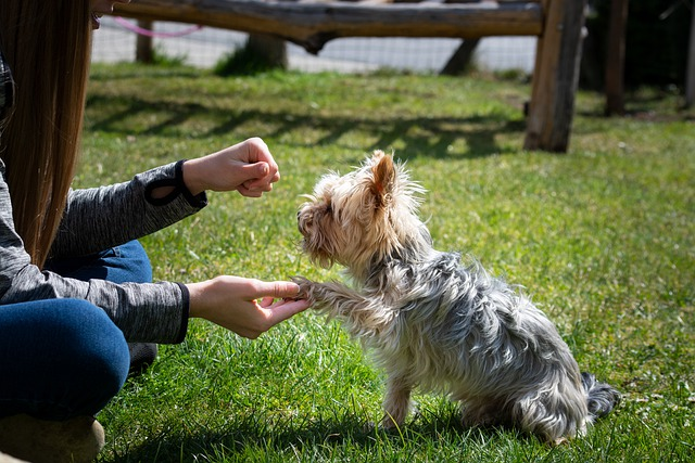 the basic commands of excellent training your dog 1 - The Basic Commands Of Excellent Training Your Dog