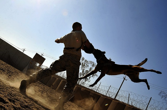 canine training doesnt have to be a chore 1 - Canine Training Doesn't Have To Be A Chore