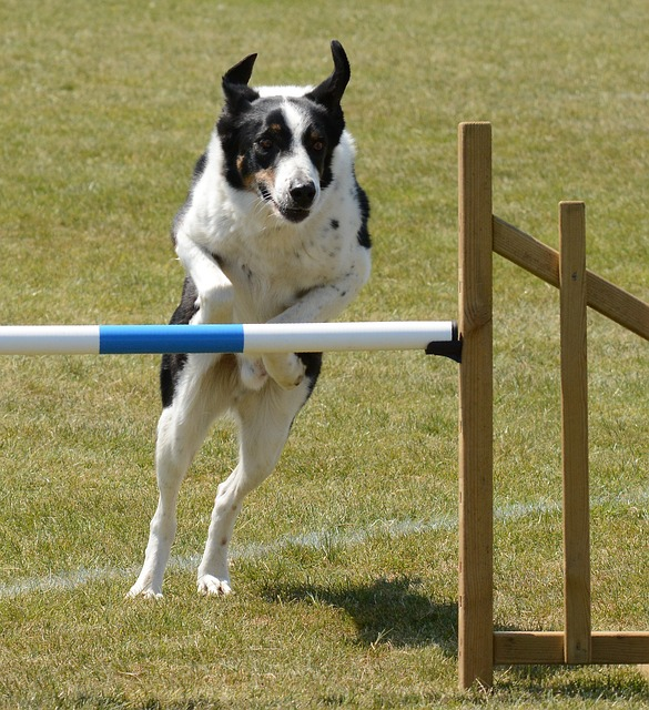 simple ways towards making longterm changes in your dogs behavior - Simple Ways Towards Making Long-Term Changes In Your Dog's Behavior