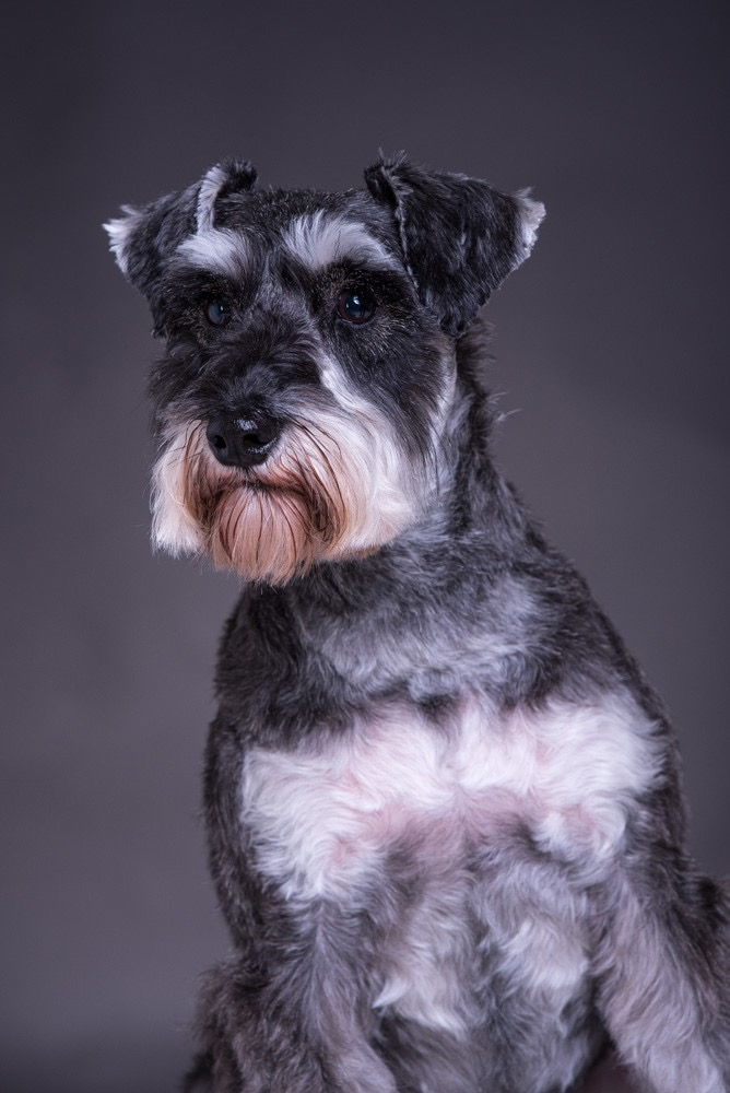 Martha's photoshoot- dog photography TWorld Studio Lichfield