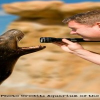 Giveaway: 3 Free Tickets to Aquarium Of The Pacific