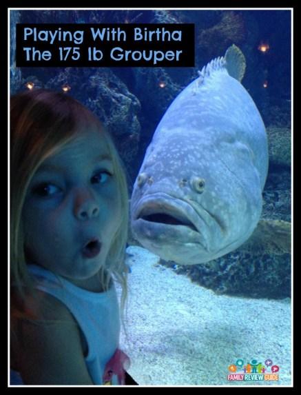 aquarium_grouper