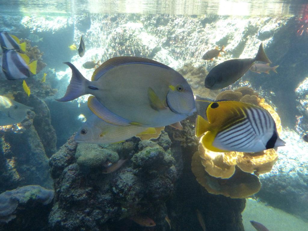 Maui itinerary for a family vacation | Family Road Trip Guru