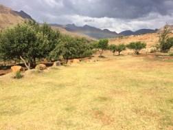 Im Hintergrund, vor den Bergen ist ein Regenbogen zu sehen. Abwohl es manchmal leicht genieselt oder geregnet hatte, war es nie genug die Erde zu befeuchten.Aufgrund des heissen Windes war der Regen verdunstet bevor er den Boden erreichen konnte. Diese Dürre war ein sehr ernstes Problem.