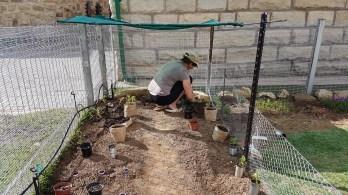 Die ersten Samen und Setzlinge werden eingesetzt.