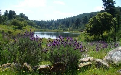 Parque Natural Sierra de Hornachuelos