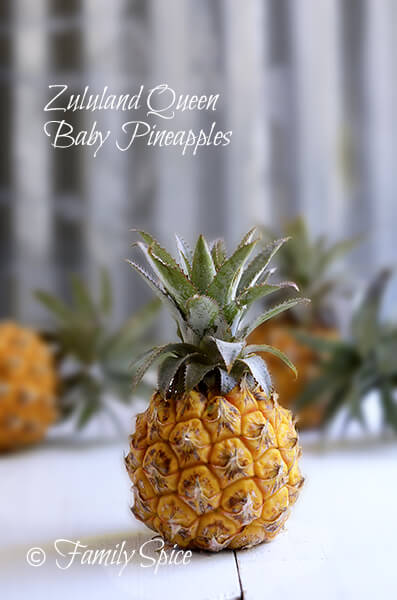 Zululand Queen Baby Pineapples by FamilySpice.com
