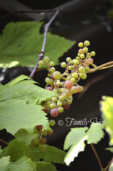 july2013_grapes